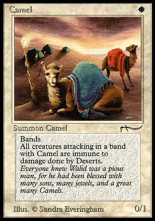 Camel, Arabian Nights