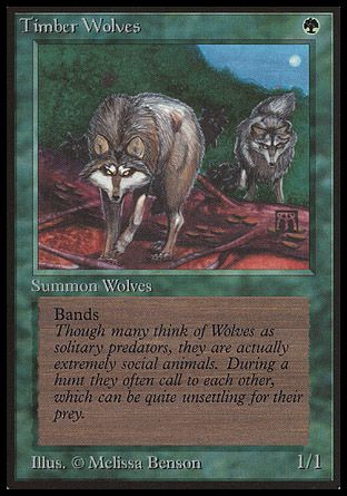 Timber Wolves, Beta